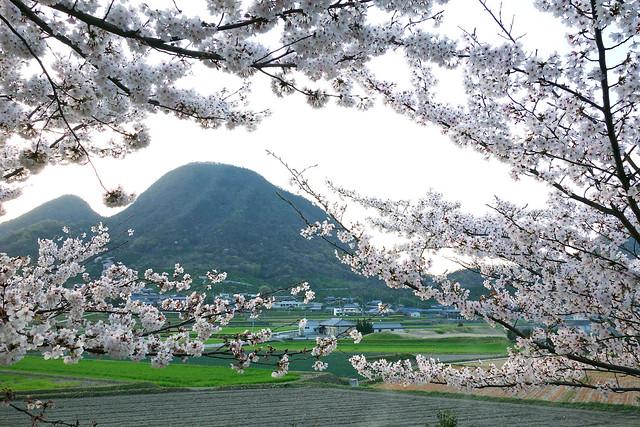 香川っぽい山
