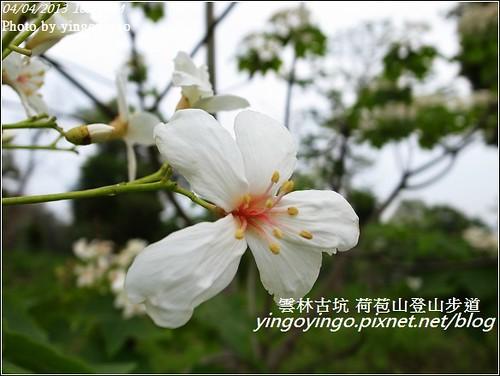 雲林古坑_古坑桐花20130404_R0073403