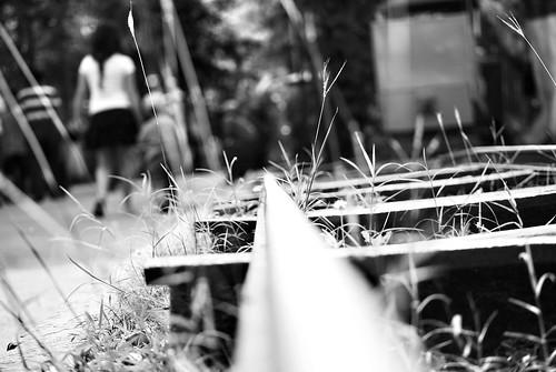 boy blackandwhite bw blur blancoynegro girl station children trenes zoo nikon dof bokeh engine el desenfoque vista railways gauge narrow desde suelo d60 fromtheground estrecha blurredbackground yucatán parquecentenario niños mérida zoológico méxico vía estacióndetren snapseed misterblur catlevelview