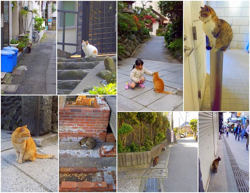 cats in Kamakura & Enoshima