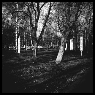 Park «Birch Grove»