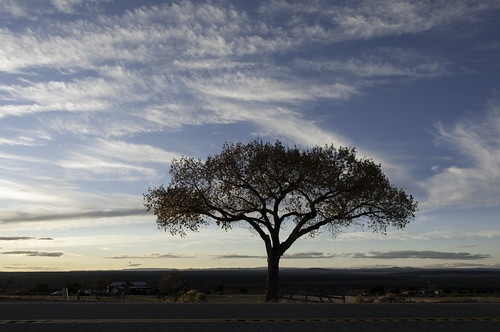 newmexico tree clouds highway dusk lone taos