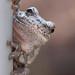 Amphibian Acrobat by LadyDragonflyCC - >;<