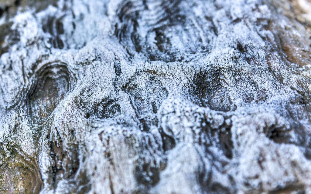 Frosty Log