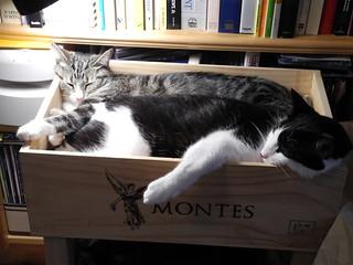 Box full o' cats