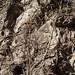 Cactus covering side of rock - Cactus escalando piedras; entre Guevea de Humboldt y Santa María Guienagati, Región Istmo, Oaxaca, Mexico por Lon&Queta