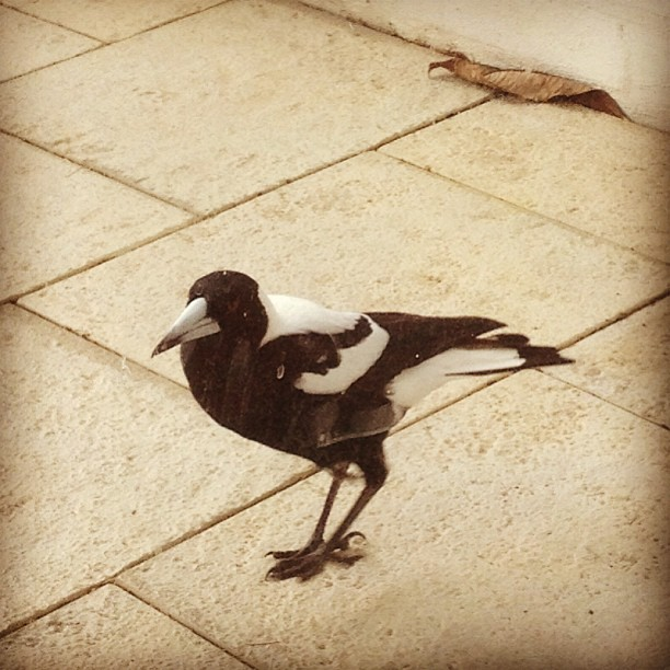 Office visitor ... #birds #picoftheday #photoftheday #perth #instagood #instagramhub #webstagram #bestsnaps #fabshots