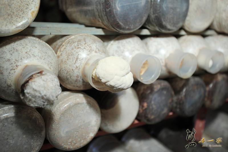 豐年生態農場|南投埔里親子遊~季節性菌菇導覽|太空包DIY