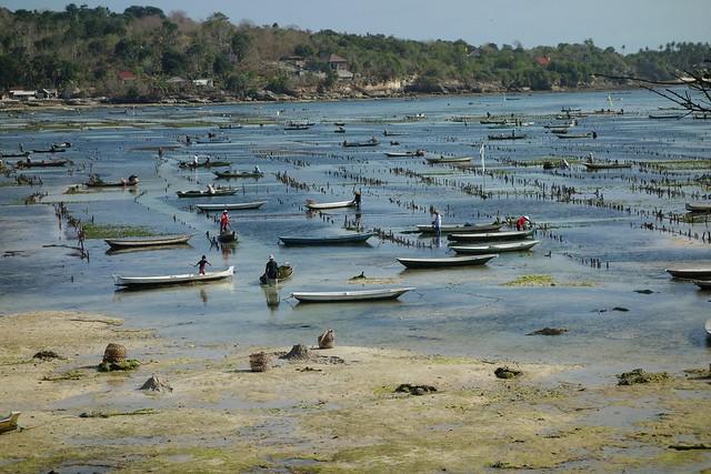 Seaweed Farmers