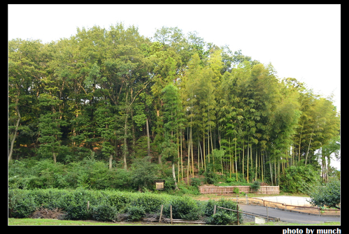 龍貓森林是日本有名的環境信託地點。圖片來源:munch