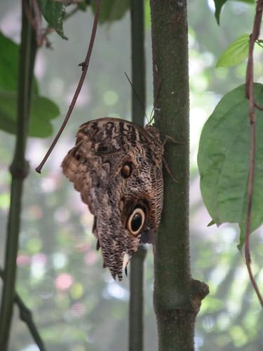 Le Parc des Oiseaux d'Iguaçu: la volière aux papillons