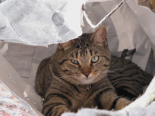 Cat in a bag. by ricmcarthur