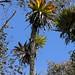 Vegetación con muchas bromelias entre San Andrés Yaá y Totontepec Villa de Morelos, Región Mixes, Oaxaca, Mexico por Lon&Queta