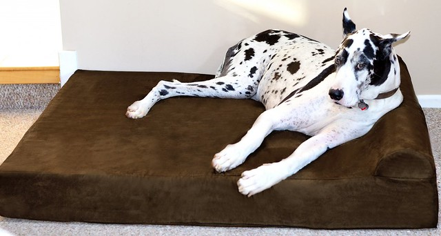 orthopedic dog beds for large & extra large dogs. handmade in the usa.