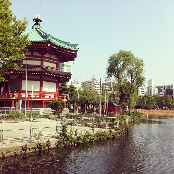 My last stroll at Ueno park#ichigonewjourney #tokyo