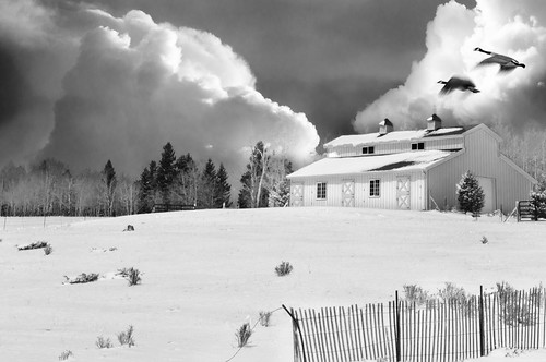 blackandwhite snow nature monochrome birds clouds barn landscape geese nikon colorado abc divide d300s 1685mm