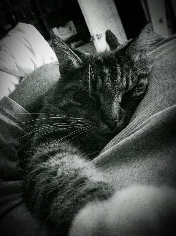 Bedtime Maxx & Me