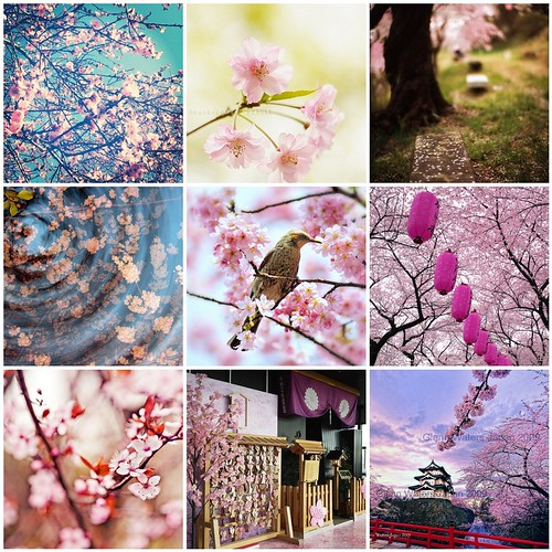 Friday Funspiration: Sakura