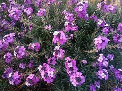 annual plant, shrub, flower, plant, flora,