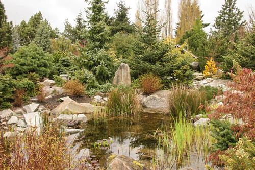 Coenosium Rock Garden