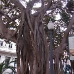 Tree in Alicante