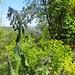 Au jardin, bourrache et euphorbes, Bosdarros, Béarn, Pyrénées Atlantiques, Aquitaine, France. ©byb64