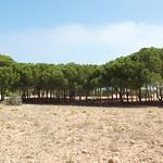 Line of trees off Santa Pola beach
