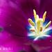 Bellissimi Colori by Luca Querzoli Fotografo alias LQ Photographer
