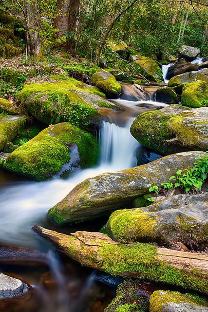 Smoky Mountain National Park TN