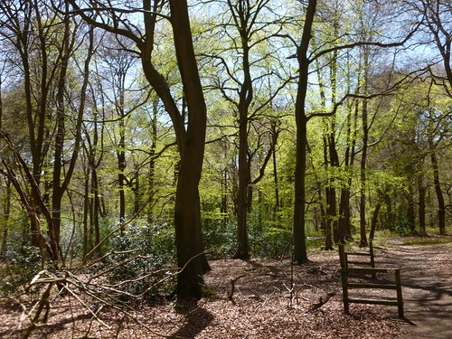 Wendover woods in late April