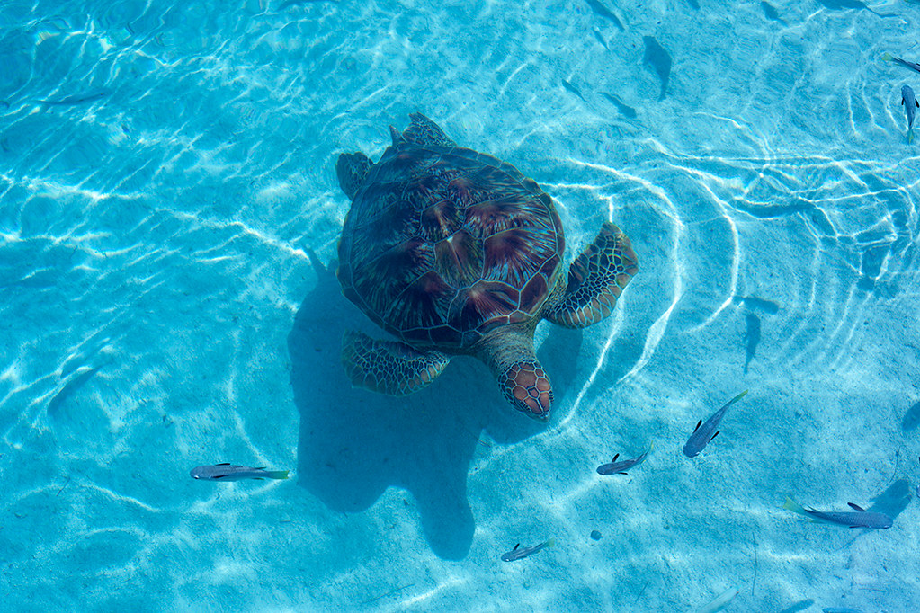 Pictures of Sea Turtles