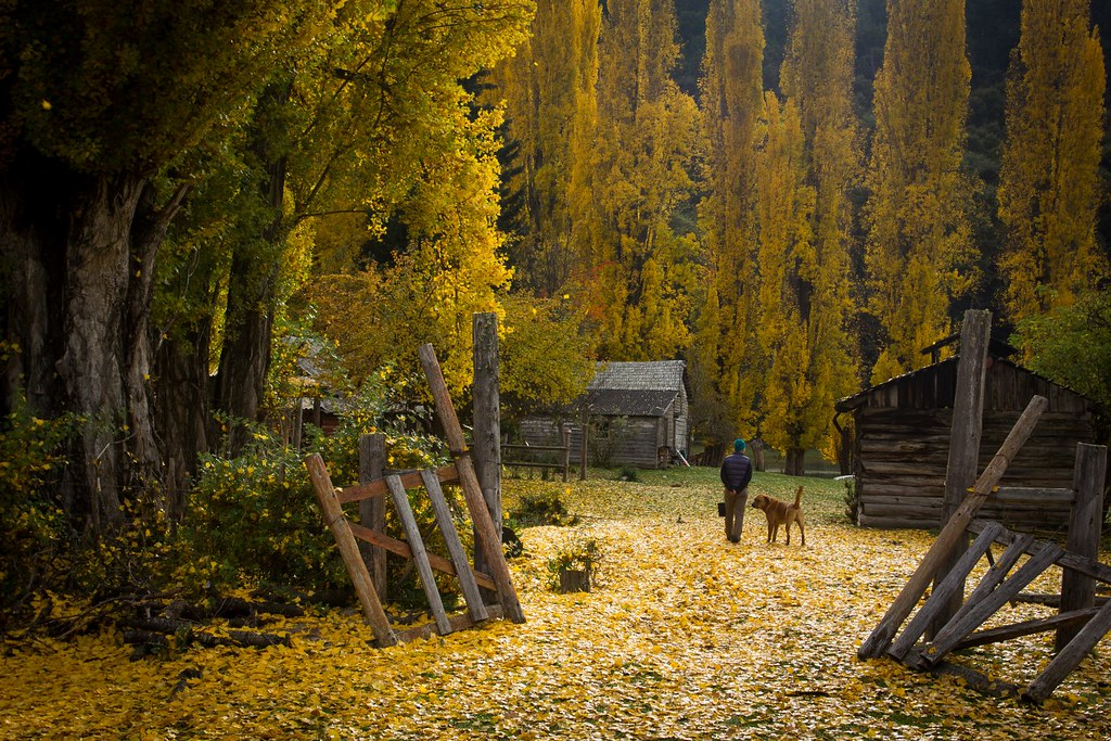 Farm-gazing. Lago Steffen. PN Nahuel Huapi. Argentina.