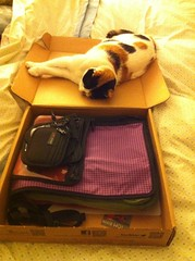 K 'helping' me pack