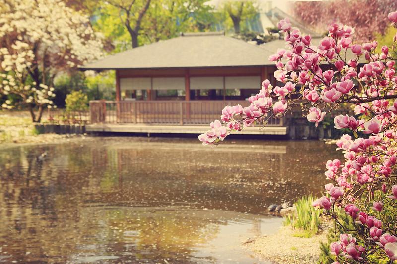 magnolias, #setagaya #vienna