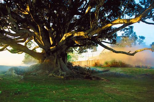 webdice_『パパの木』サブ4