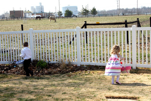 Egg-Hunt-horses