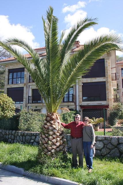 Gigantic Pineapple
