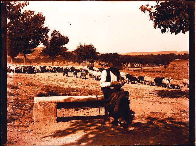 Pastor en la Vega Baja. Fotografía de Pedro Román © Fondo Rodríguez. archivo Histórico Provincial. JCCM. Signatura R-132-1-01