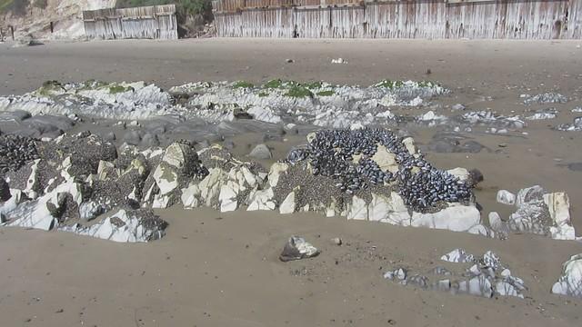 MVI_7793 mollusks on beach rocks to bird islands east haskell