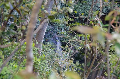 龍泉の滝雌滝 2013.4.7-2