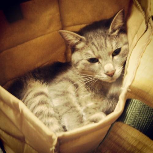 在りし日のなな。トートバッグの中で満足そうな顔 by Chinobu