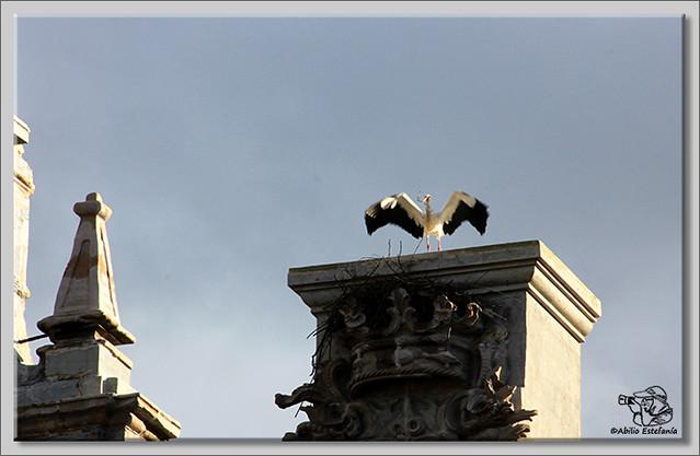 3 Cigüeña faenando con el nido