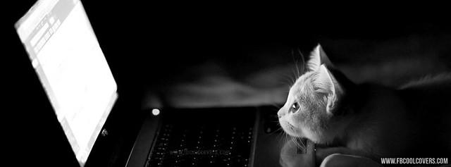 خلفيات فيس بوك 2013 - Cute Cat Facebook Timeline Covers - خلفيات قطط كيوت 2013