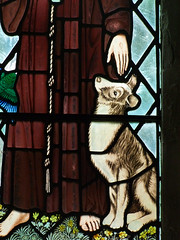sheepdog for St Francis