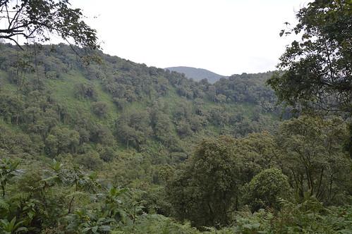 Virunga rainforest 1