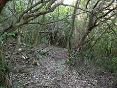 Sentier d'accès au chaos de Valle di Scopa : vers l'arrivée à l'oriu n°1