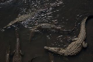Costa Rica - Crocodile Bridge