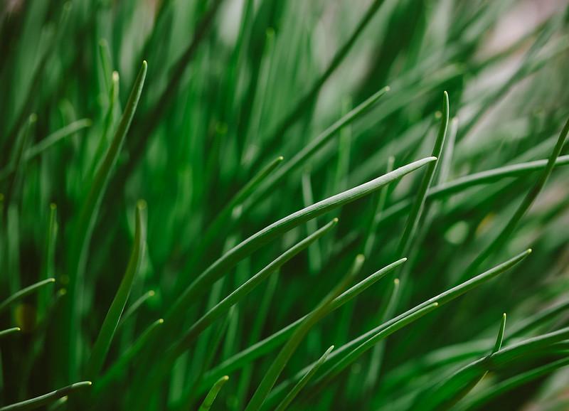 IMAGE: http://farm9.staticflickr.com/8260/8678907364_e7c38a23ba_c.jpg
