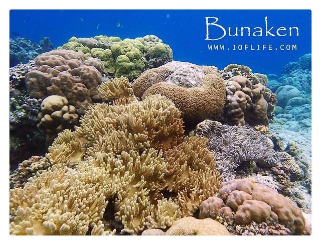 trumbu karang bunaken