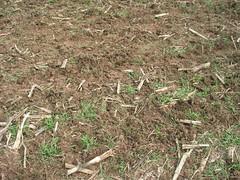 agriculture, soil, grass, mulch,